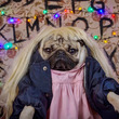 Conoce al pug que recreó la serie Stranger Things [FOTOS y VIDEOS]