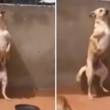 "Perro que baila ""Scooby Doo PaPa"" guarda un oscuro secreto [VIDEO]"