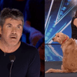 Simon Cowell impactado por canto de perrito en America's Got Talent [VIDEO]